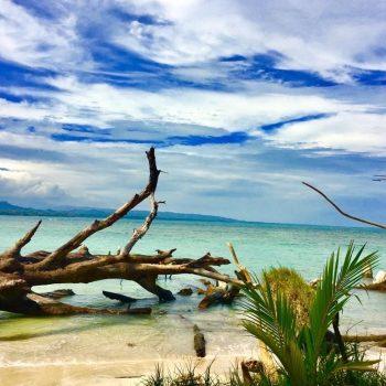 Beach pic w fallen log