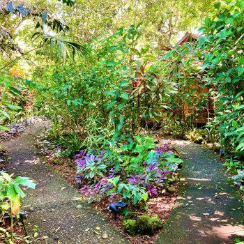 Lush garden path to bungalows