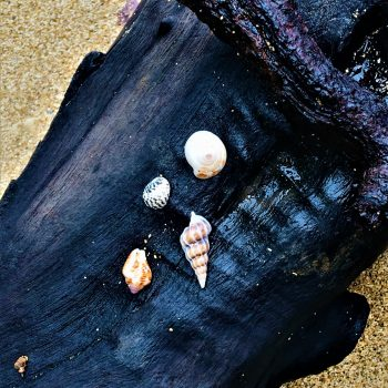 Seashells from Manzanillo Beach, Costa Rica